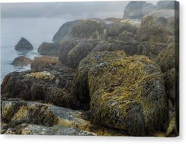 Maine's Rocky Coast Canvas Print by Joseph Smith