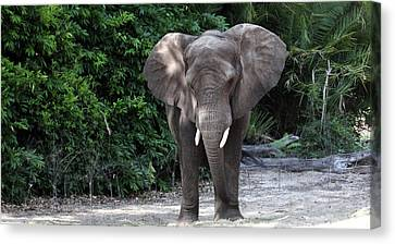 Majestic African Elephant Canvas Print
