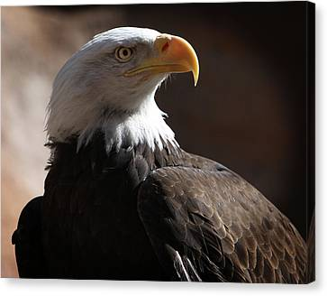 Majestic Eagle Canvas Print by Marie Leslie