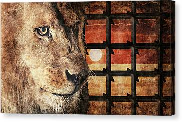 Majestic Lion In Captivity Canvas Print