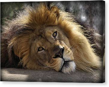 Majestic Love Canvas Print by Linda Mishler