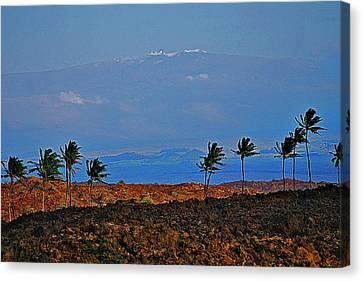 Majestic Mauna Kea Canvas Print by Bette Phelan