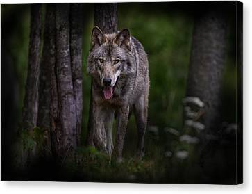 Majestic Canvas Print by Michael Cummings