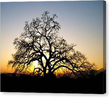 Majestic Oak Tree Sunset Canvas Print