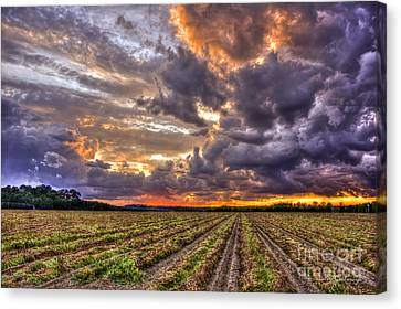 Canvas Print featuring the photograph Majestic Peanut Harvest Sunset Art by Reid Callaway