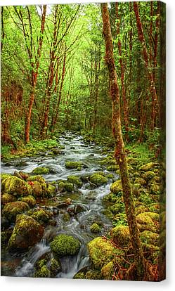Majestic Stream Canvas Print by Tyra  OBryant