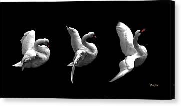 Majestic Swan Triptych Canvas Print