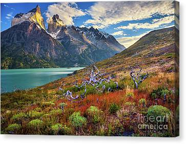 Fall Grass Canvas Print - Majestic Torres Del Paine by Inge Johnsson