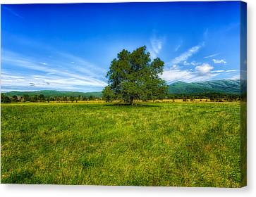 Tennessee Historic Site Canvas Print - Majestic White Oak Tree In Cades Cove - 3 by Frank J Benz