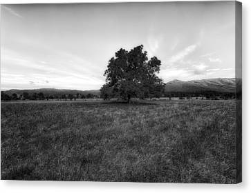 Tennessee Historic Site Canvas Print - Majestic White Oak Tree In Cades Cove - 4 by Frank J Benz