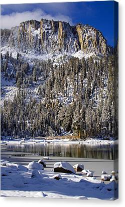 Majestically Cool Canvas Print by Chris Brannen