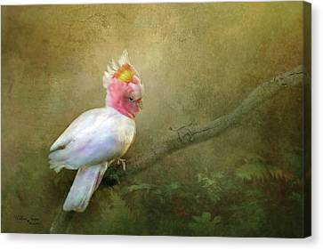 Canvas Print featuring the photograph Major Mitchell's Cockatoo by Wallaroo Images