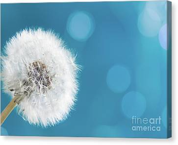 Make A Wish  Canvas Print by Anastasy Yarmolovich