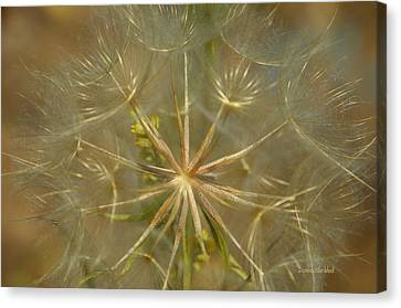 Make A Wish Canvas Print by Donna Blackhall