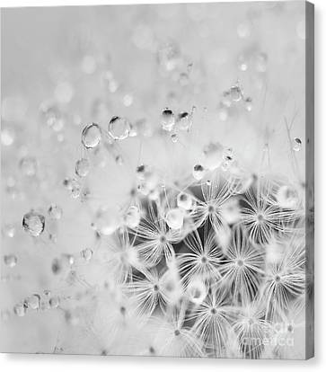 Survive Canvas Print - Make A Wish For The Day by Masako Metz
