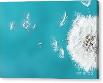 Make A Wish II Canvas Print by Anastasy Yarmolovich