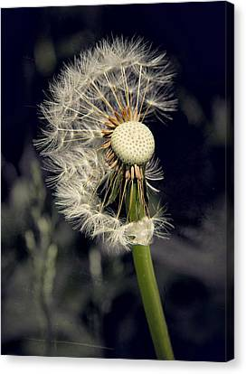Make A Wish Canvas Print by Odd Jeppesen