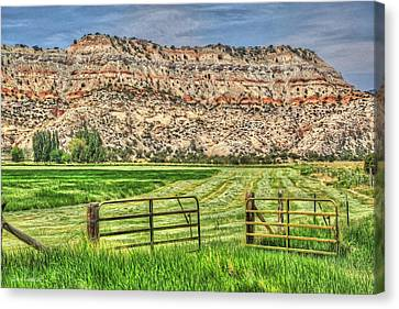 Make Hay While The Sun Shines Canvas Print by Donna Kennedy