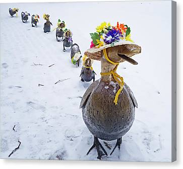 Make Way For Ducklings A Little Early For The Spring Bonnets Canvas Print by Toby McGuire