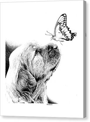 Making Friends Canvas Print by Carole Raschella
