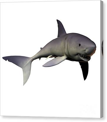 Mako Shark Canvas Print by Corey Ford