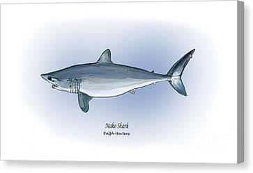 Mako Shark Canvas Print by Ralph Martens