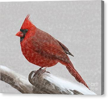 Male Cardinal In Snow Canvas Print by Rand Herron