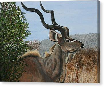 Male Kudu Antelope Canvas Print by Betty-Anne McDonald