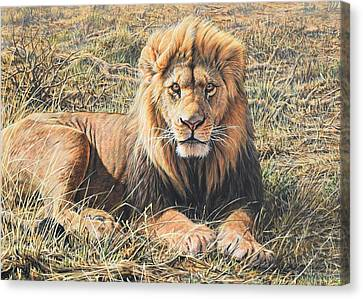 Male Lion Portrait Canvas Print