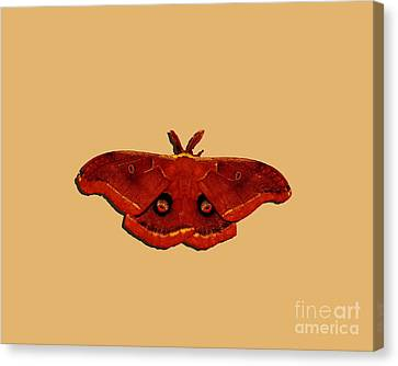 Canvas Print featuring the photograph Male Moth Red .png by Al Powell Photography USA