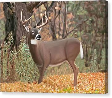 Male Mule Deer Painting Canvas Print