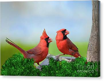 Male Northern Cardinals In Spring Canvas Print by Bonnie Barry