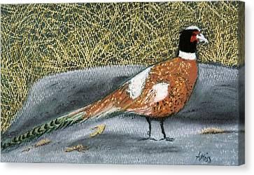 Male Pheasant Canvas Print by Jan Amiss
