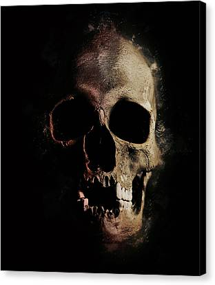 Male Skull With Missing Teeth Canvas Print