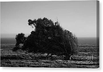 Canvas Print featuring the photograph Malformed Treeline by Clayton Bruster