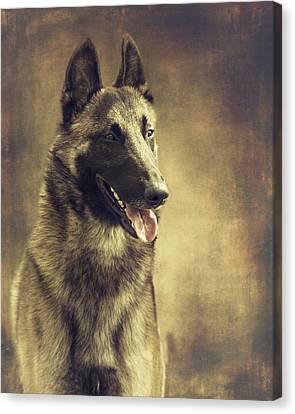 Malinois Portrait Canvas Print