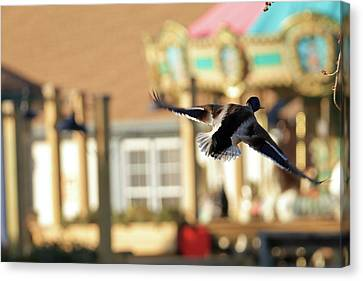 Mallard Duck And Carousel Canvas Print by Geraldine Scull