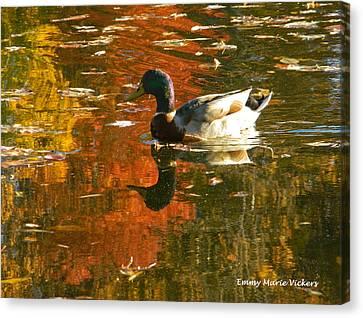 Mallard Duck In The Fall Canvas Print