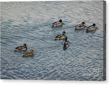 Mallard Ducks In Pond 2 Canvas Print by Jean Bernard Roussilhe