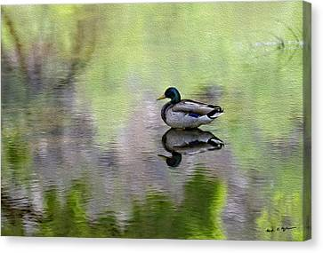Canvas Print featuring the photograph Mallard In Mountain Water by Mark Myhaver