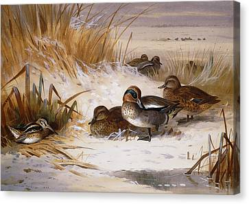 Mallard Widgeon And Snipe At The Edge Of A Pool In Winter Canvas Print by Archibald Thorburn