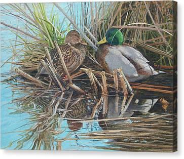 Mallards At Rithet's Bog Canvas Print