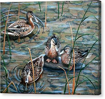 Mallards Canvas Print by Brenda Baker