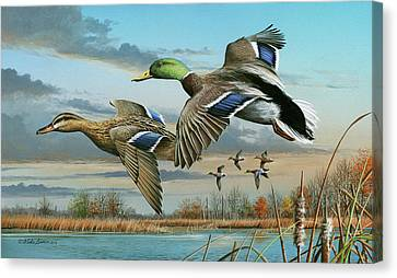 Mallards In Flight Canvas Print by Mike Brown