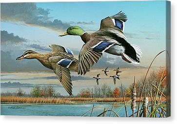 Mallards In Flight Canvas Print