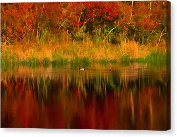Mallards Through Reflection Of  Fall Colors Canvas Print by Jeff Folger