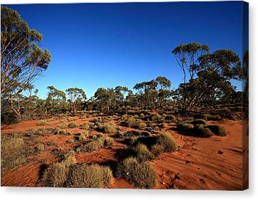 Mallee And Spinifex Canvas Print