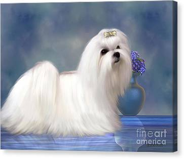 Maltese Dog Canvas Print by Corey Ford