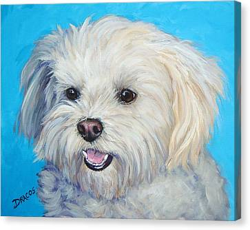 Maltese In Sunlight Canvas Print by Dottie Dracos