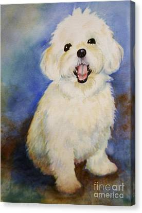 Maltese Named Ben Canvas Print